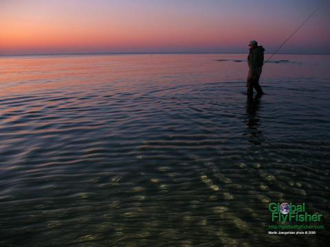 Wading in the shallows on a beautiful evening  | Global