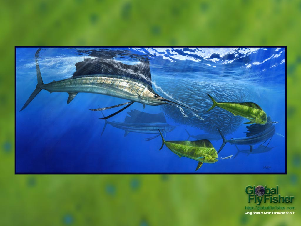 Sailfish and Dorado   Global FlyFisher