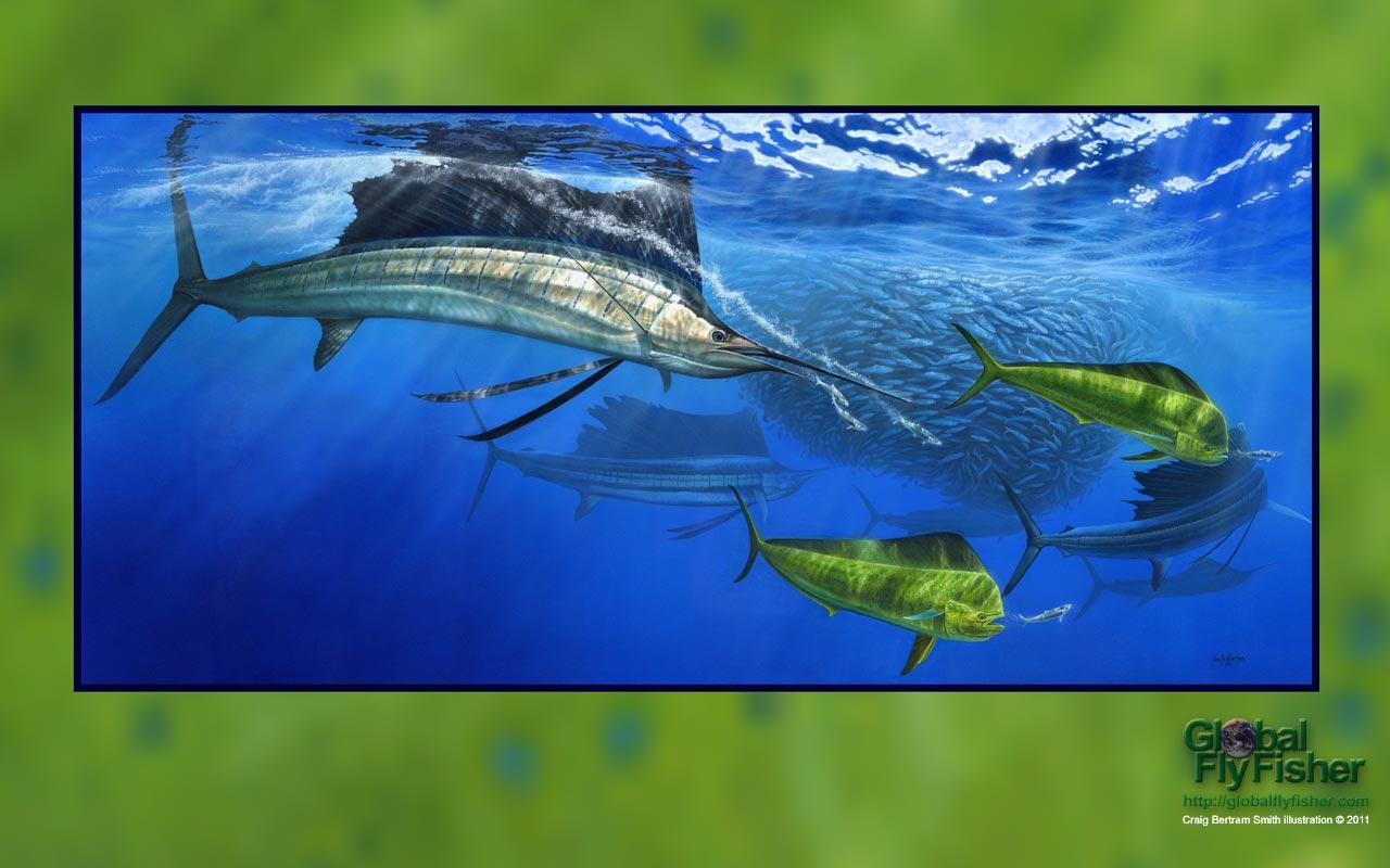 Sailfish and Dorado | Global FlyFisher